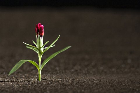 Sprouting Into the World