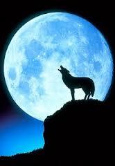 Moon Madness, Real or Fake?