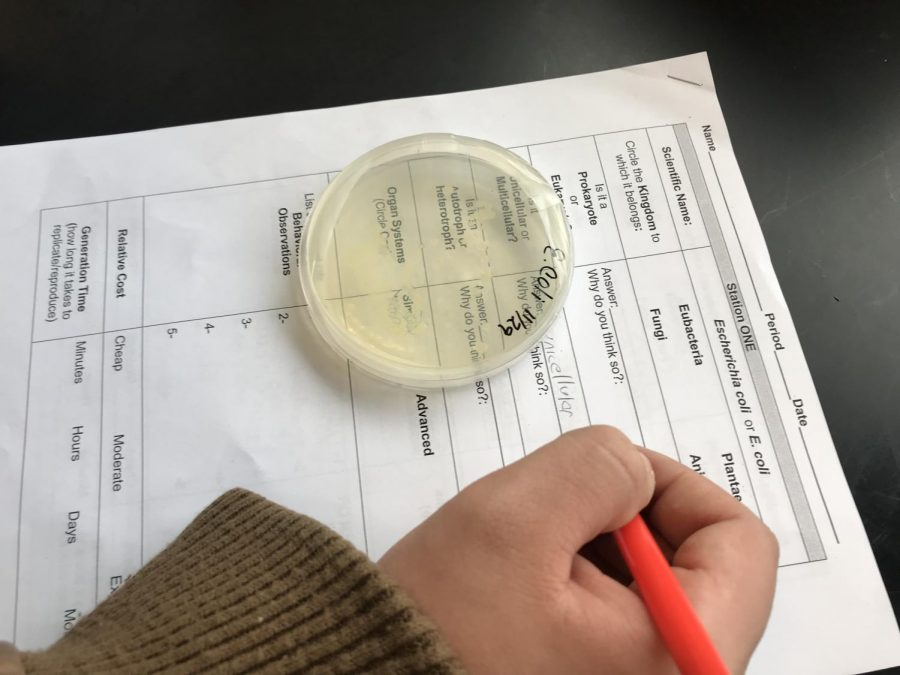Biology Classes Experience Pitts Research Models