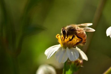 2019 National 4-H Beekeeping Essay Competition